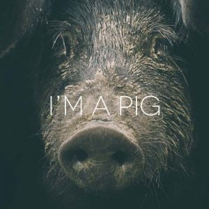 MAIALE-PIG