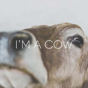 MUCCA-COW